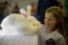 """""""Emeranthus, a 4-month-old Angora rabbit, won best fancy in the under 5s show at the Rabbit Olympics."""" Wait.. There's a Rabbit Olympics?"""