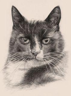 Cat portraits gallery - Pet Portraits & Animal Art by Tobiasz Stefaniak