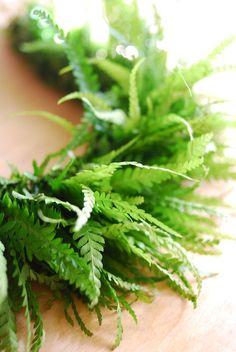 先日のレイメイキングレッスン。 Palapalai(イシカグマ)で編むHili Lei.   ※Hili(ヒリ)...単一の植物で編んだレイ ...