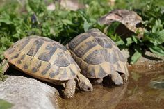 Construction of a new drinking and bathing bowl - tortoises in the Hunsrück - Landschildkröten - Shark Activities, Fun Activities For Kids, Animals And Pets, Baby Animals, Funny Animals, Turtle Enclosure, Freshwater Turtles, Terrarium Reptile, Aquatic Turtles