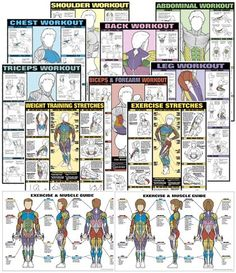 Buyamag inc provide bodybuilding posters fitness exercise charts. Visual education how muscle workout poster weight lifting, training Bar Workout, Dumbbell Workout, Workout Gear, Workout Plans, Muscle Training, Weight Training, Strength Training, Weight Lifting, Bodybuilding Posters