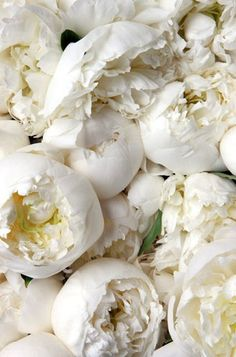 White Peonies= favorite flower
