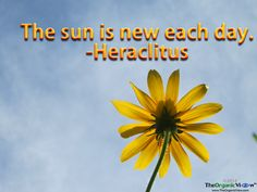 The sun is new each day. Heraclitus