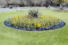 Bed of flowers, Stephens Green, Dublin, Ireland [BY WILLIAM MURPHY]