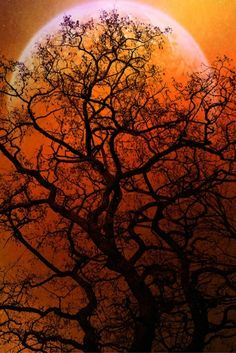 tree silhouetted against orange sky with super moon.