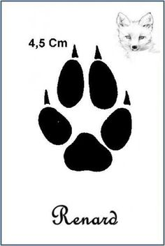 Animal Spirit Guides, Spirit Animal, Animal Footprints, Fox Crafts, Close To My Heart, My Animal, Woodworking Crafts, Stencils, Recherche Google