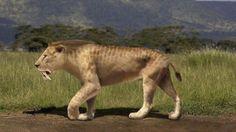 Tigre dientes de sable (Smilodon populator).