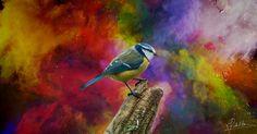 Wonderland - Wonderland (blue tit bird)