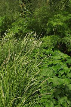 Sarah Price Landscapes   » Olympic Great British Garden