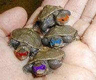 Real life Ninja Turtles!