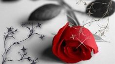 Rose creative romantic hd wallpapers
