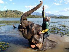 laos-sayabouli-elephant-conservation-center-man-on-bathing-elephant-reaching-for-trunk-tiger-trail-20.jpg