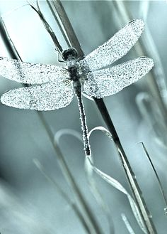 Dragonflies are significant in my novel (WIP) by the same name. Beautiful.  Love is Ageless  http://www.susanhaught.com