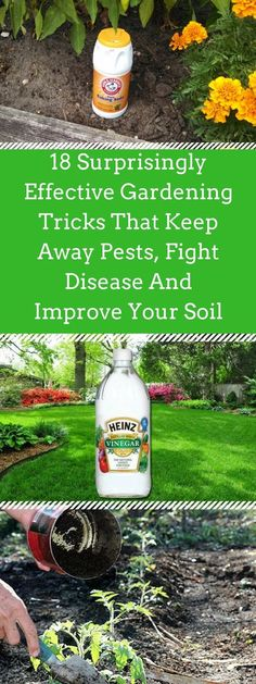 Organic vegetable garden - 18 Surprisingly Effective Gardening Tricks That Keep Away Pests, Fight Disease And Improve Your Soil – Organic vegetable garden Perth, Vegetable Garden Planner, Vegetable Gardening, Veggie Gardens, Gardening Tools, Container Gardening, Urban Gardening, Growing Tomatoes In Containers, Grow Tomatoes