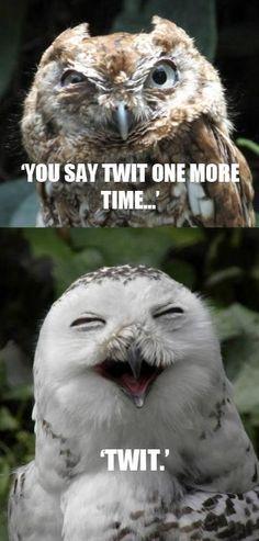 funny owls #owl #funny #meme