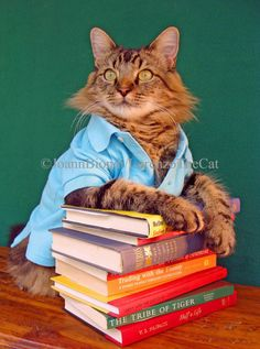 Lorenzo the cat like totally reads more than you do.