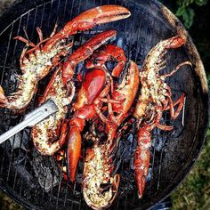 Grilled Lobster on the half shell over an inferno of hardwoods and livefire with brown butter & a garden of fresh herbs. Courtesy: The incredibly talented Alison Roman Grilled Lobster, Grilled Fish, Grilled Seafood, Lobster Recipes, Seafood Recipes, Fish Recipes, Lobster Dishes, Fish Dishes, Seafood Dishes