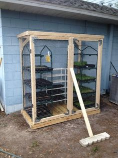 Growing fodder for meat rabbits in a cage.