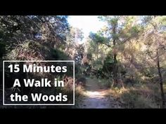 """15 Minute Beginner Cardio: Virtual Scenery for Treadmill """"A Walk in the Woods"""" Best Treadmill Workout, Beginner Cardio Workout, Low Impact Cardio Workout, Beginners Cardio, Bum Workout, Best Cardio, Workout Schedule, Elliptical Workouts, Workout Plans"""