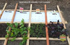 Make seed mats for your square foot garden in the comfort of your heated home and start planning your vegetable garden layout and crop rotation schedule. Garden Crafts, Garden Projects, Garden Ideas, Garden Tips, Diy Crafts, Spring Vegetable Garden, Vegetable Gardening, Gemüseanbau In Kübeln, Growing Carrots