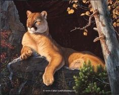 Animals Drawing mansanarez Vantage Point Tom Mansanarez wildlife art - Vantage Point A large male cougar or mountain lion lies on a rock while surveying his domain. Wildlife Paintings, Wildlife Art, Animal Paintings, Animal Drawings, Lion Painting, Lion Art, Mule Deer, Mountain Lion, My Animal