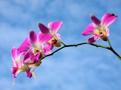 Beautiful Orchid...