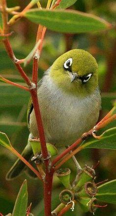 Ankarada meraklı kuş ;)