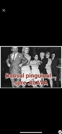 Dansul Pinguinul - Viral Pe Internet Funny Pics, Funny Pictures, Internet, Humor, Quotes, Movies, Movie Posters, Fanny Pics, Fanny Pics