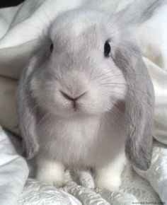 baby bunny, love his coloring Cute Baby Bunnies, Cute Baby Animals, Animals And Pets, Funny Animals, Little Critter, Tier Fotos, Cute Creatures, Animals Beautiful, Pet Birds