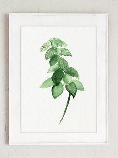 Hierbas medicinales plantas tabla set 3 hierba acuarela