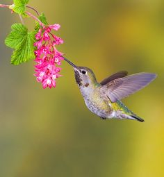 Humming Along Speaking of brains, a hummingbird's hippocampus, which is responsible for memory and learning, is up to five times bigger than...