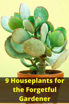 9 Houseplants for the Forgetful Gardener