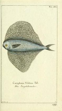 Bd 5 plates (1784) - Gemeinnüzzige Naturgeschichte des Thierreichs : - Biodiversity Heritage Library