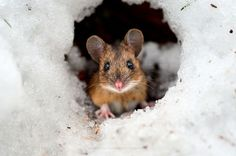 This compilation of wildlife photography is by 20 year old Konsta Punkka (aka KPunkka), based in Helsinki Finland. He specializes in wildlife photog. All Gods Creatures, Cute Creatures, Beautiful Creatures, Animals Beautiful, Animals And Pets, Baby Animals, Funny Animals, Cute Animals, Wild Animals