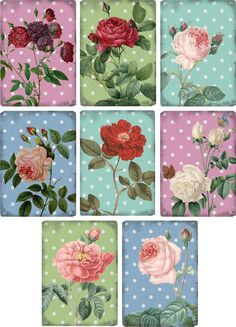 Vintage Inspired Roses Polka Dot Small Note Cards Tags ATC Altered Art Set of 8