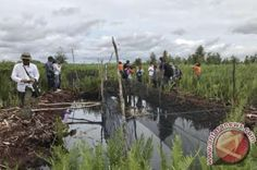 Siak To Build Swamp Irrigation System With State Budget