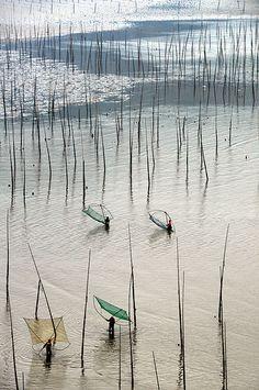 vvv Mudflats with bamboo sticks 灘塗