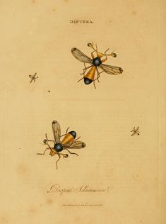 https://flic.kr/s/aHsjz9NoVb | An epitome of the natural history of the insects of India | An epitome of the natural history of the insects of India London,Printed for the author by T. Bensley, Bolt Court, Fleet Street; and sold by Messrs, Rivingtons, Str. Paul's Church Yard; White, Fleet Street, Faulder, Bond Street; and H. D. Symonds, Patersonter Row,1800. www.biodiversitylibrary.org/item/82222