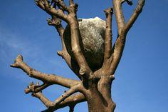 dOCUMENTA (13): Karlsauepark - Kunstbeeld  Giuseppe Penone, de boom waar de dOCUMENTA symbolisch mee startte