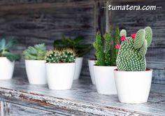 Diseño elegante y moderno, con forma redondeada asociada a una amplia gama de tamaños y colores. Encuentralas en: http://www.tumatera.co/products/mpa-0907-san-remo/