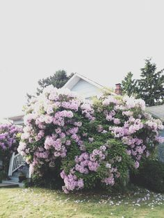 - Memories of home I grew up in - ( Start music...) - Had two huge lilac trees in front yard -