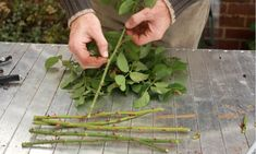 # Tips For Landscaping On A Budget Taking rose cuttings an easy to guide, we also show you how to grow your roses in potatoes.Taking rose cuttings an easy to guide, we also show you how to grow your roses in potatoes. Growing Roses, Growing Plants, Gardening For Beginners, Gardening Tips, Roses In Potatoes, Gemüseanbau In Kübeln, Rose Cuttings, Vegetable Garden Planning, Pot Jardin