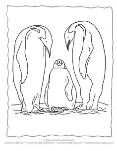 Free Printable Penguin Coloring Pages from our Wildlife Coloring pages at wonderweirded-wildlife.com, Free Teacher Resources Penguin Theme