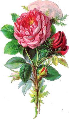 Oblaten Glanzbild scrap die cut chromo  Rose  14,5 cm  Blume flower