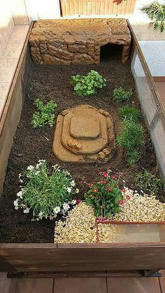 Tortoise House, Tortoise Habitat, Tortoise Table, Turtle Care, Pet Turtle, Outdoor Tortoise Enclosure, Turtle Terrarium, Turtle Enclosure, Red Footed Tortoise