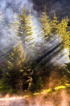 Misty Forest, Bulgaria