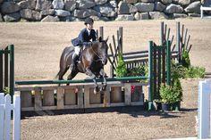 Black mare, Chiquitita Oldenburg x Quater horse