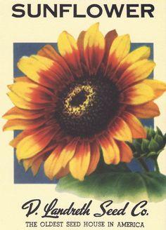 Heirloom Flower Seed Packet Note Cards
