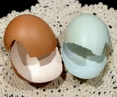 What Makes a Blue Egg Blue? -- Fresh Eggs Daily for Community Chickens