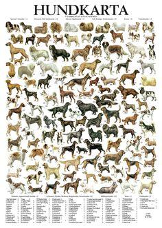Hundkarta - 118 dog breeds på svenska, poster for the stuga